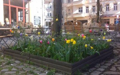 Urban gardening und bunte Ostereier